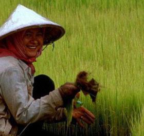 Người nông dân Campuchia