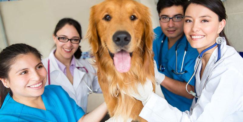 Du học Mỹ ngành thú y
