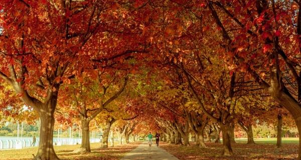 rừng cây lá vàng