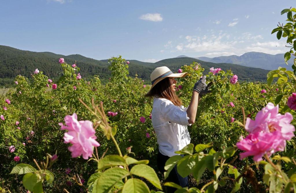 Thung lũng hoa hồng thơ mộng ở đất nước xinh đẹp Bulgaria1